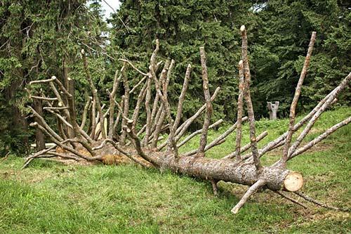North-Richland-Tree-Service-Experts-fallen-tree