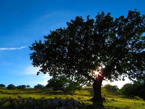 North-Richland-Hill-Huge-tree