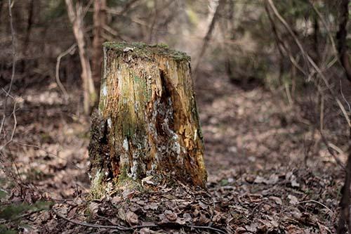 North-Richland-Tree-Service-Experts-stump